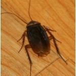Отпугиватели грызунов, тараканов, клопов, муравьев