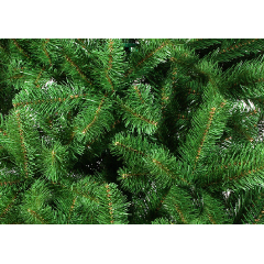 Сосна Рождественская 155